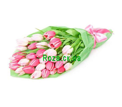 """31 white and pink tulip"" in the online flower shop roza.ck.ua"