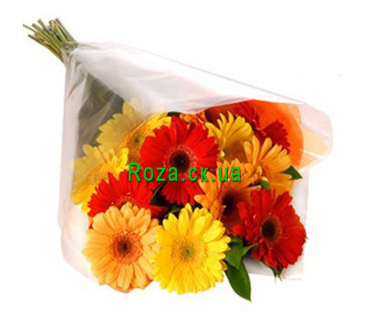 """Bouquet of gerberas in cellophane"" in the online flower shop roza.ck.ua"