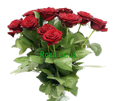 """Bouquet of red roses Cherkassy"" in the online flower shop roza.ck.ua"