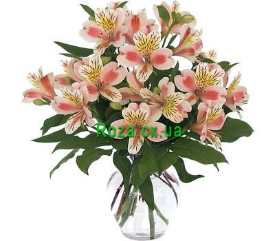 """Buy Alstroemeria Cherkasy"" in the online flower shop roza.ck.ua"