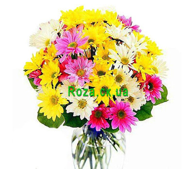 """Buy chrysanthemums Cherkassy"" in the online flower shop roza.ck.ua"