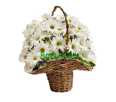 """A small basket of chrysanthemums"" in the online flower shop roza.ck.ua"