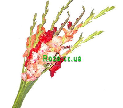 """A small bouquet of gladiolus"" in the online flower shop roza.ck.ua"