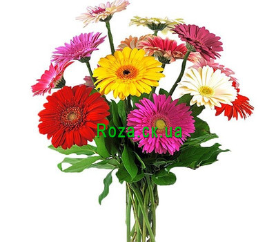 """Buy a bouquet of gerberas of Cherkassy"" in the online flower shop roza.ck.ua"