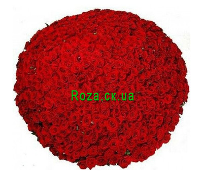 """""""1001 rose in bouquets"""" in the online flower shop roza.ck.ua"""