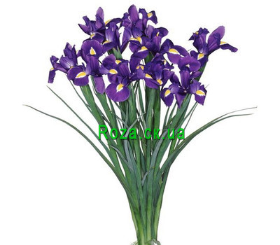 """13 irises"" in the online flower shop roza.ck.ua"