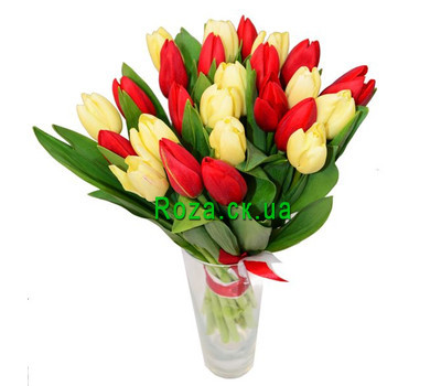 """25 white and red tulips"" in the online flower shop roza.ck.ua"