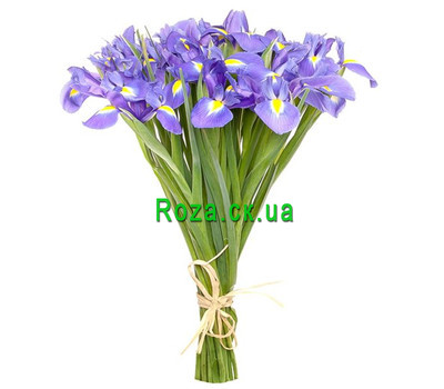 """25 irises"" in the online flower shop roza.ck.ua"