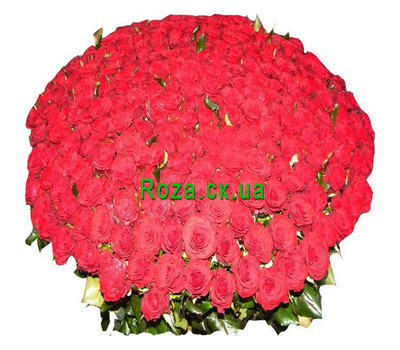 """501 rose"" in the online flower shop roza.ck.ua"