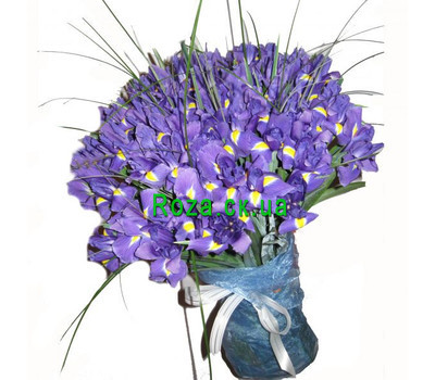 """75 irises"" in the online flower shop roza.ck.ua"