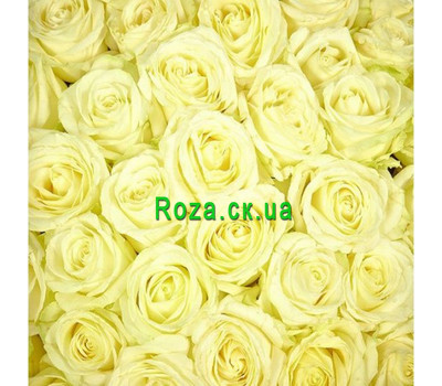 """""""White roses (by the piece)"""" in the online flower shop roza.ck.ua"""