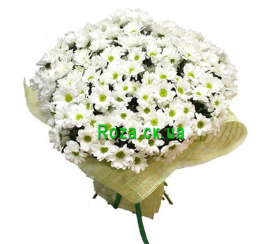 """Large bouquet of chamomile chrysanthemums"" in the online flower shop roza.ck.ua"