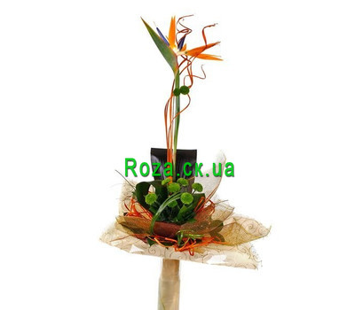 """Bouquet of Strelitzia"" in the online flower shop roza.ck.ua"