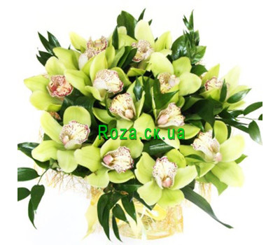 """Bouquet of green orchids"" in the online flower shop roza.ck.ua"