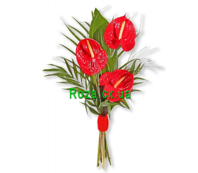 """""""Bouquets of anthurium"""" in the online flower shop roza.ck.ua"""