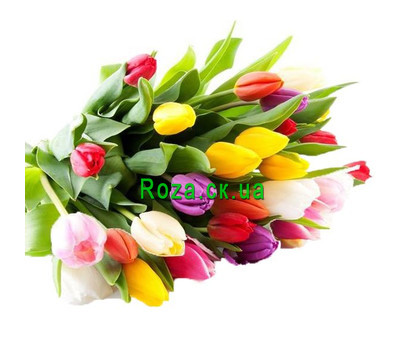 """""""Wonderful bouquet of multi-colored tulips"""" in the online flower shop roza.ck.ua"""