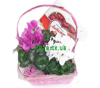 """""""Корзинка цикламенов"""" в интернет-магазине цветов roza.ck.ua"""
