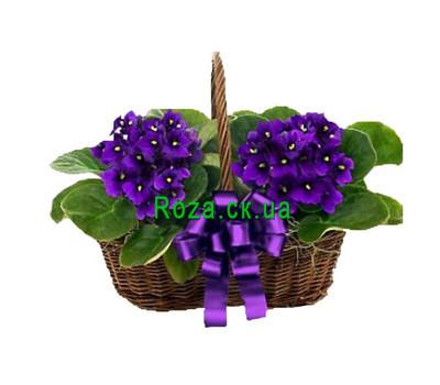 """""""Violet Basket"""" in the online flower shop roza.ck.ua"""