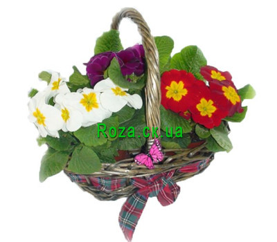 """Primrose basket"" in the online flower shop roza.ck.ua"
