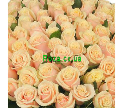 """Cream roses (by the piece)"" in the online flower shop roza.ck.ua"