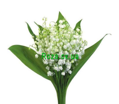"""Lilies of the valley in a bouquet"" in the online flower shop roza.ck.ua"