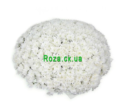 """Huge bouquet of chrysanthemums"" in the online flower shop roza.ck.ua"
