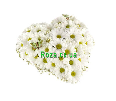"""""""Сердце из хризантем"""" в интернет-магазине цветов roza.ck.ua"""