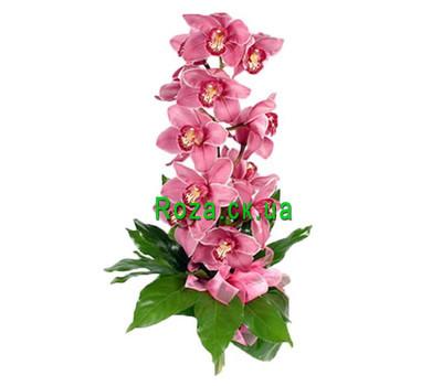 """""""Ветка розовой орхидеи"""" в интернет-магазине цветов roza.ck.ua"""