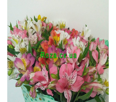 """Classic bouquet of alstroemerias 1"" in the online flower shop roza.ck.ua"