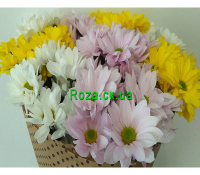 """Buy chrysanthemums in Cherkassy 3"" in the online flower shop roza.ck.ua"