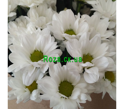 """""""A small bouquet of chrysanthemums 3"""" in the online flower shop roza.ck.ua"""