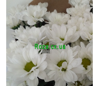"""""""A small bouquet of chrysanthemums 4"""" in the online flower shop roza.ck.ua"""