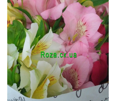 """15 alstroemeria 4"" in the online flower shop roza.ck.ua"