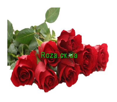 """Bouquet of imported roses"" in the online flower shop roza.ck.ua"