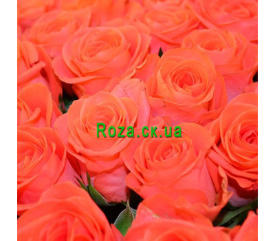 """""""Yellow roses (by the piece)"""" in the online flower shop roza.ck.ua"""
