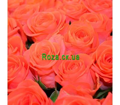 """""""Желтые розы (поштучно)"""" в интернет-магазине цветов roza.ck.ua"""